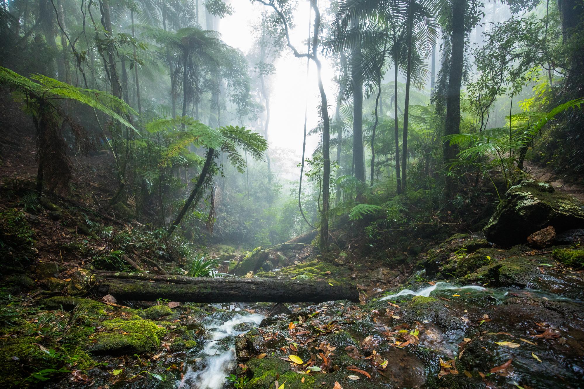 Gold Coast Hinterland