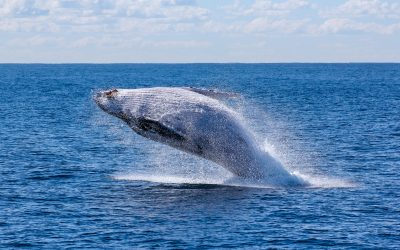 Rooftop Whale Watching – Viscount on the Beach Gold Coast