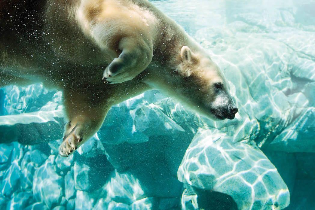 Sea World Gold Coast theme park