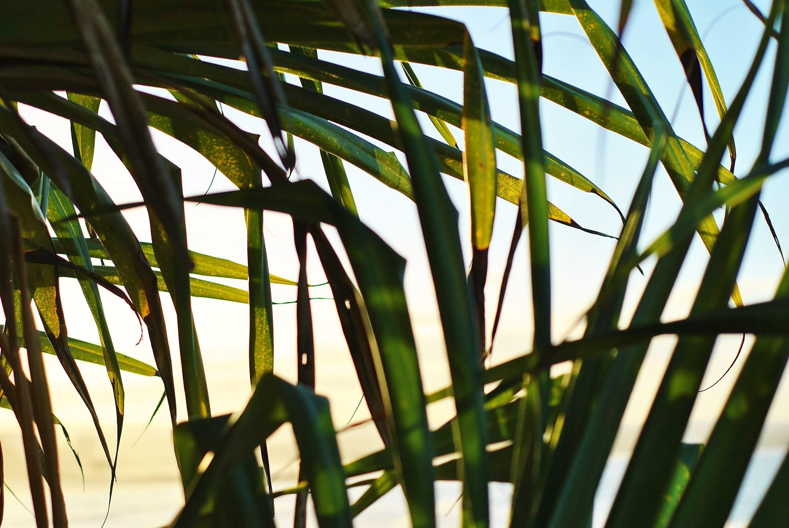 Palm leaves beach